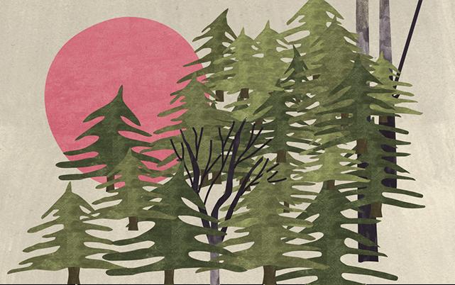 Forest Illustration by Julie Flett
