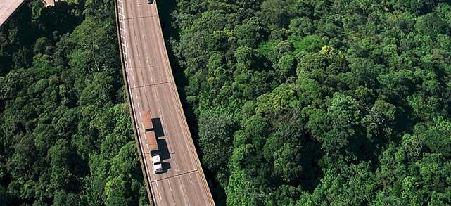 Highway Jungle