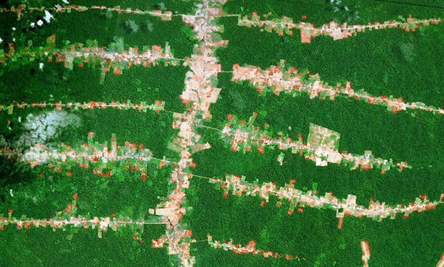 Deforestation along roads in Rondonia, Brazil. Image by Google Earth.