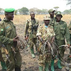 An anti poacher ranger patrol displaying 32 snares captured while on patrol.