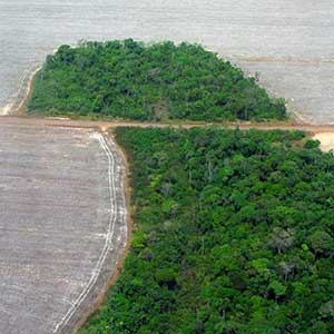 Clear-cutting to make way for farm land in the state of Matto Grasso, Brazil.
