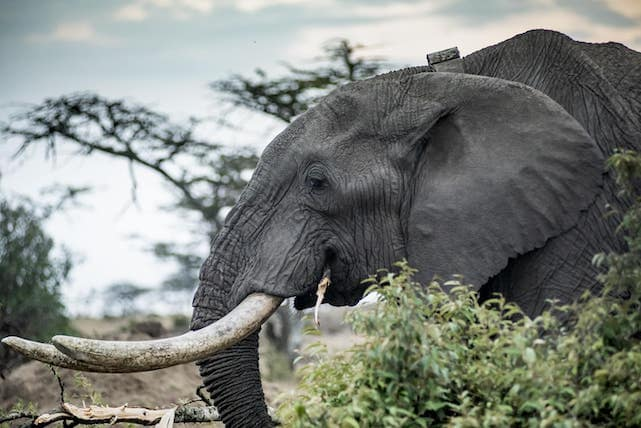 The Economics Of Saving Kenya S Elephants Corporate Knights