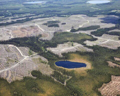 clearcutting planet's carbon pool