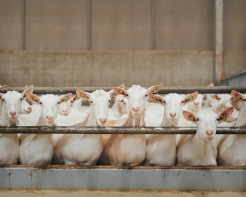 animal welfare investments