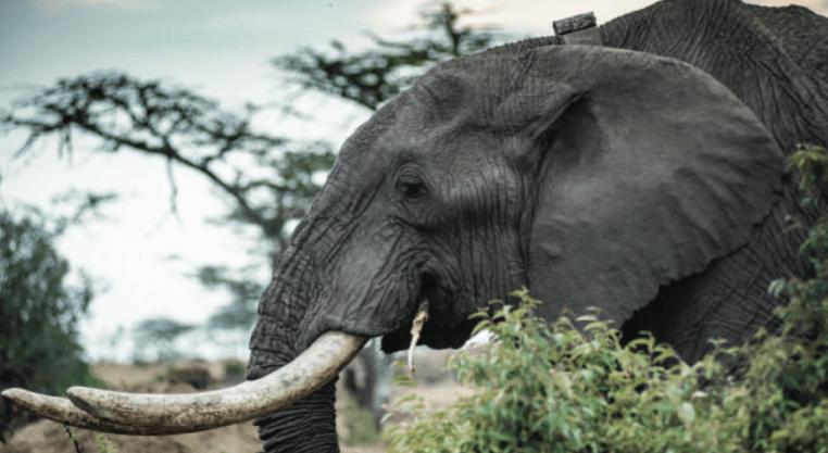 covid tourism wildlife