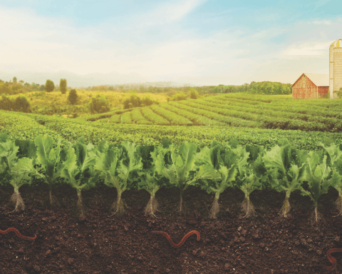 regenerative agriculture saving the earth