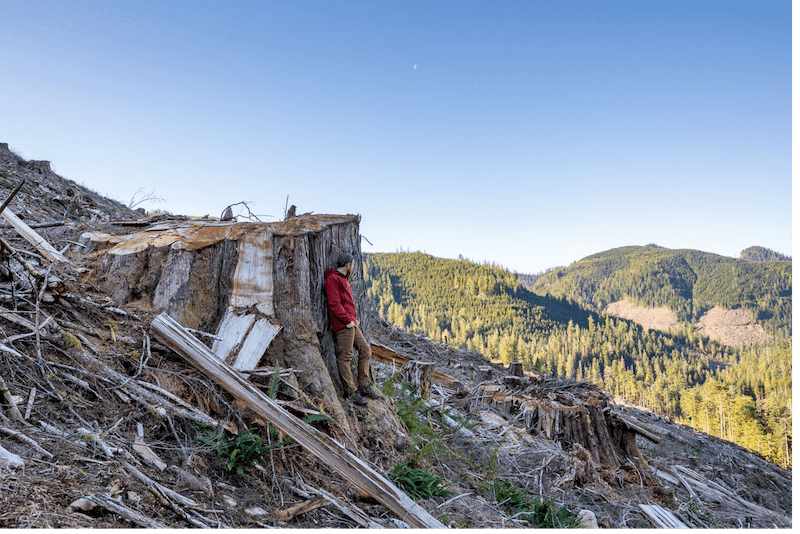 B.C.'s old-growth forests not out of the woods