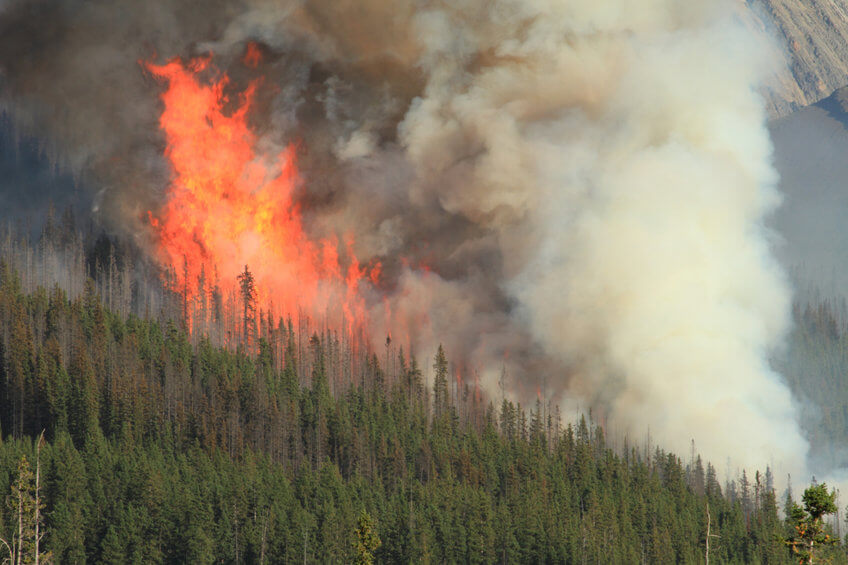Indigenous forestry burning